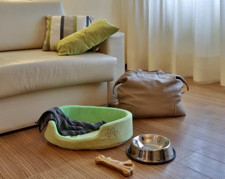 At the Best Western Hotel Biri, 4-sta in Padua, pets are welcome: find out all the services dedicated to those who travel with their pet!