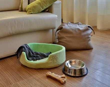 The hotel Biri in Padova Centre is ideal for you and for your 4-legged friend!