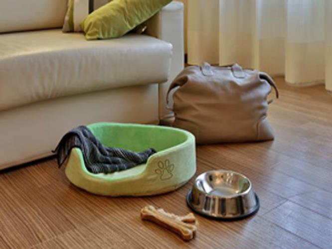 Pet Friendly Room in Padua